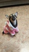 pyjama chaud pour chien