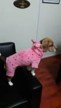 vêtement 4 pattes pour petit chien
