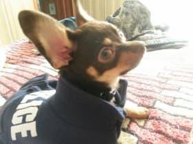 manteau 4 pattes pour chien