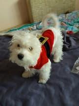 déguisement de père noël pour petit chien