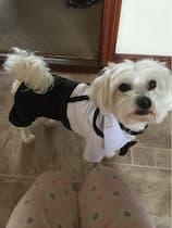 habit de cérémonie pour chien