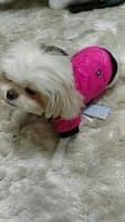 manteau douillet pour chien