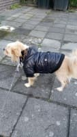 chien porte manteau hiver