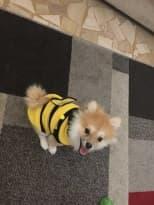 chien habillé en costume d'abeille