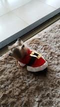 petit chien déguisé en père noël