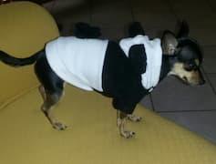 chien déguisé en panda