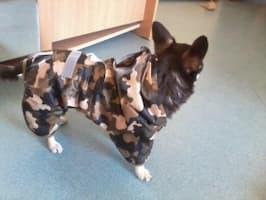 habit de pluie kaki pour chien