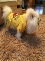 habit de pluie super-héros pour petit chien