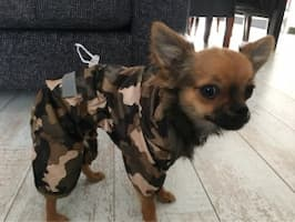 vêtement de pluie pour petit chien