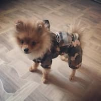 habit de pluie pour chien