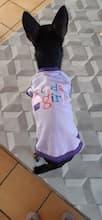 t-shirt de fête d'anniversaire pour chien