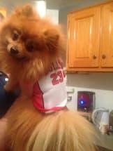 maillot chicago bulls pour chien