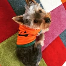 habit halloween pour petit chien