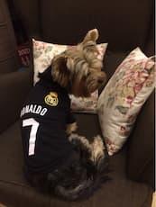 t-shirt football pour petit chien