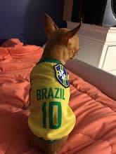 maillot jaune du brésil pour petit chien