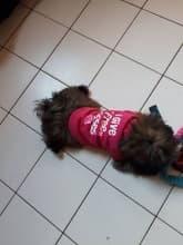 t-shirt rose petit chien