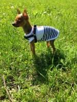 t-shirt rayé marin pour petit chien
