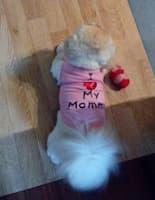t-shirt imprimé et strass pour chien