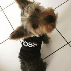 vêtement boss pour chien