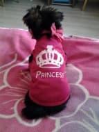vêtement princesse pour chien