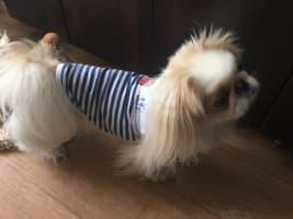 débardeur marin pour petit chien