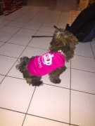 t-shirt rose princesse pour chien