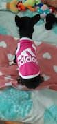 t-shirt respirant pour le sport canin