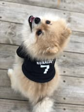 maillot football ronaldo pour chien