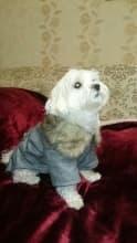 manteau d'hiver pour chien