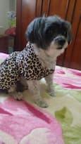 chien porte manteau léopard
