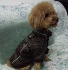 manteau épais pour chien