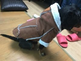 doudoune d'hiver pour petit chien