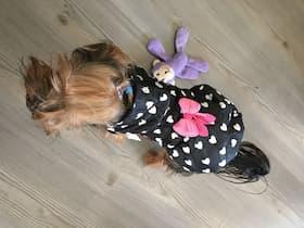 doudoune petit chien