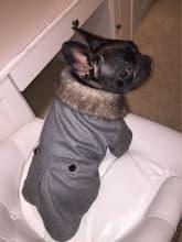 manteau classe avec gros col fourrure pour chien