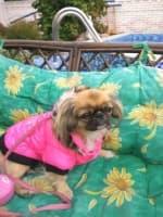 doudoune fourrée pour chien