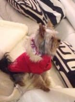 manteau réversible avec capuche pour chien