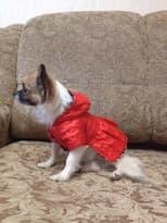 manteau réversible pour chihuahua