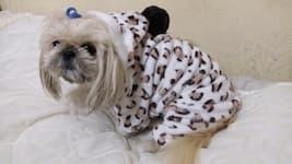 vêtement polaire 4 pattes pour petit chien