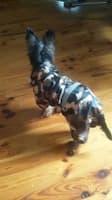 imperméable look chasse pour chien