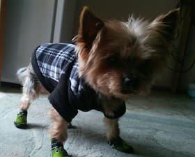 pull polaire à capuche pour chien