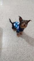 yorkshire en tricot
