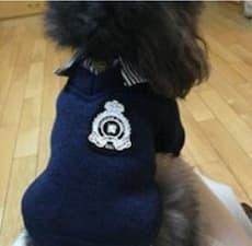 pull style britannique pour chien