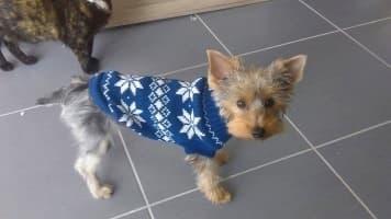 pull hiver pour chien