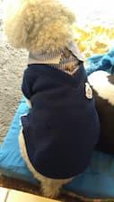 pull col chemise pour petit chien