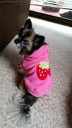 pull décoration fraise pour chien