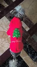 pull décoration de noël pour chien