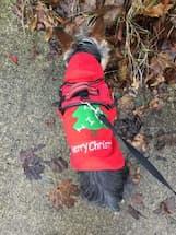 pull à capuche décoration noël pour chien