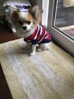pull à capuche pour chien