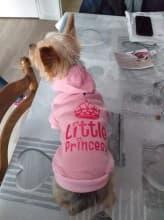sweat princesse couronne pour chien
