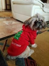 pull à capuche pour noël pour petit chien